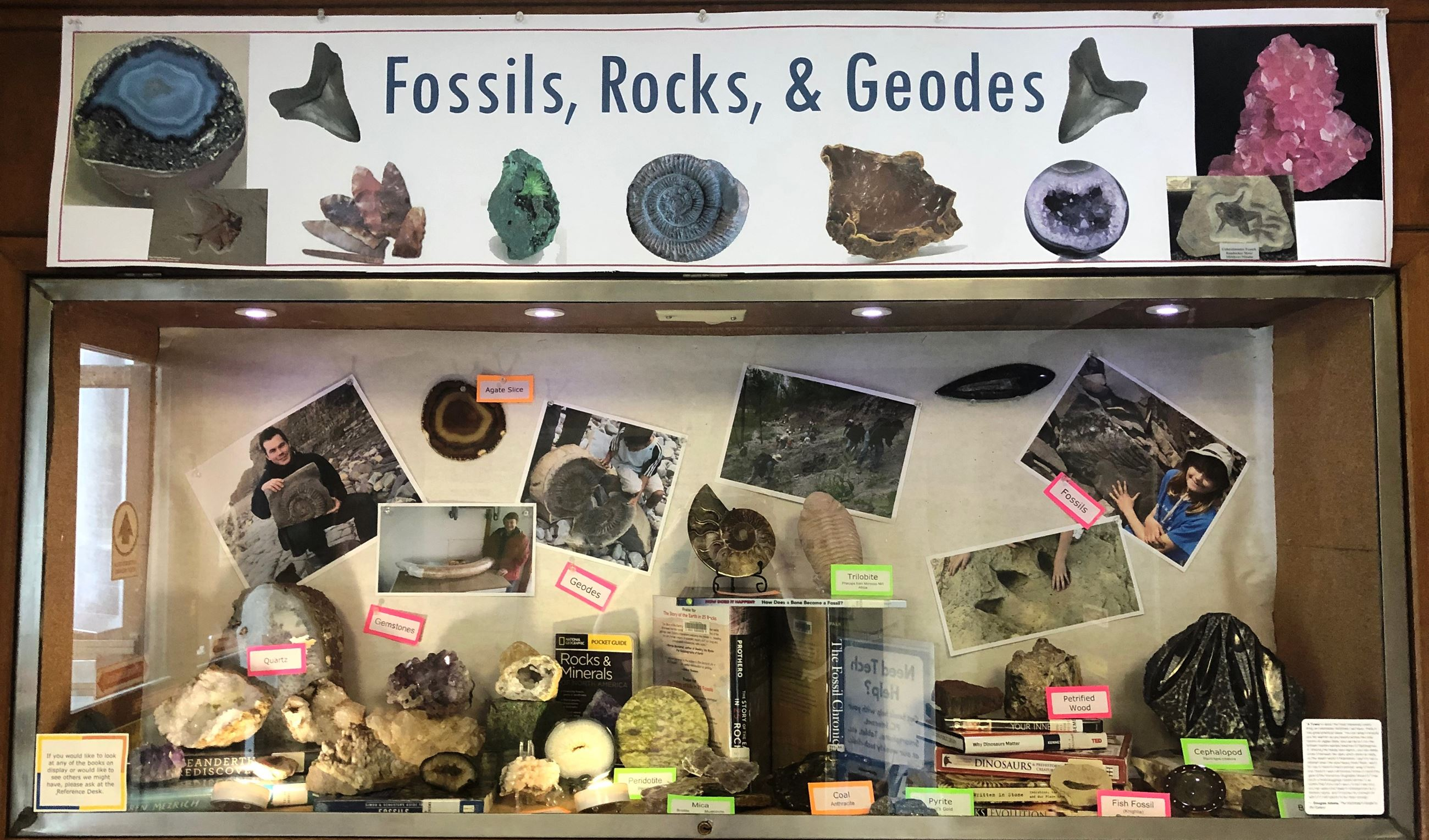 Fossils Rocks and Geodes