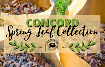Spring Leaf Collection - News Flash