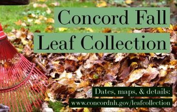 Fall Leaf Graphic
