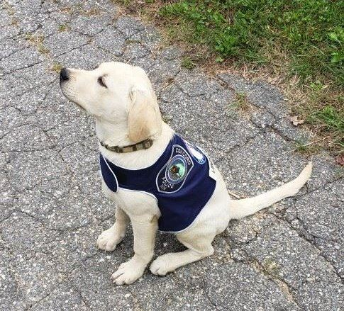 Liberty-Concord PD comfort dog
